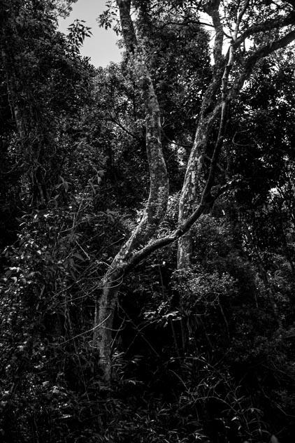 Parque Estadual Três Picos - luzes e texturas